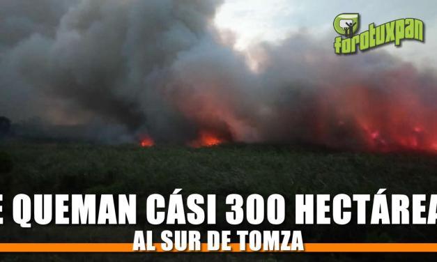 Se queman casi 300 hectáreas al sur de TOMZA