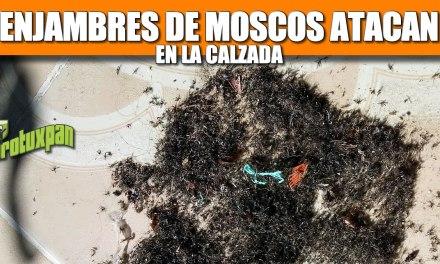 Enjambres de MOSCOS atacan en la Calzada