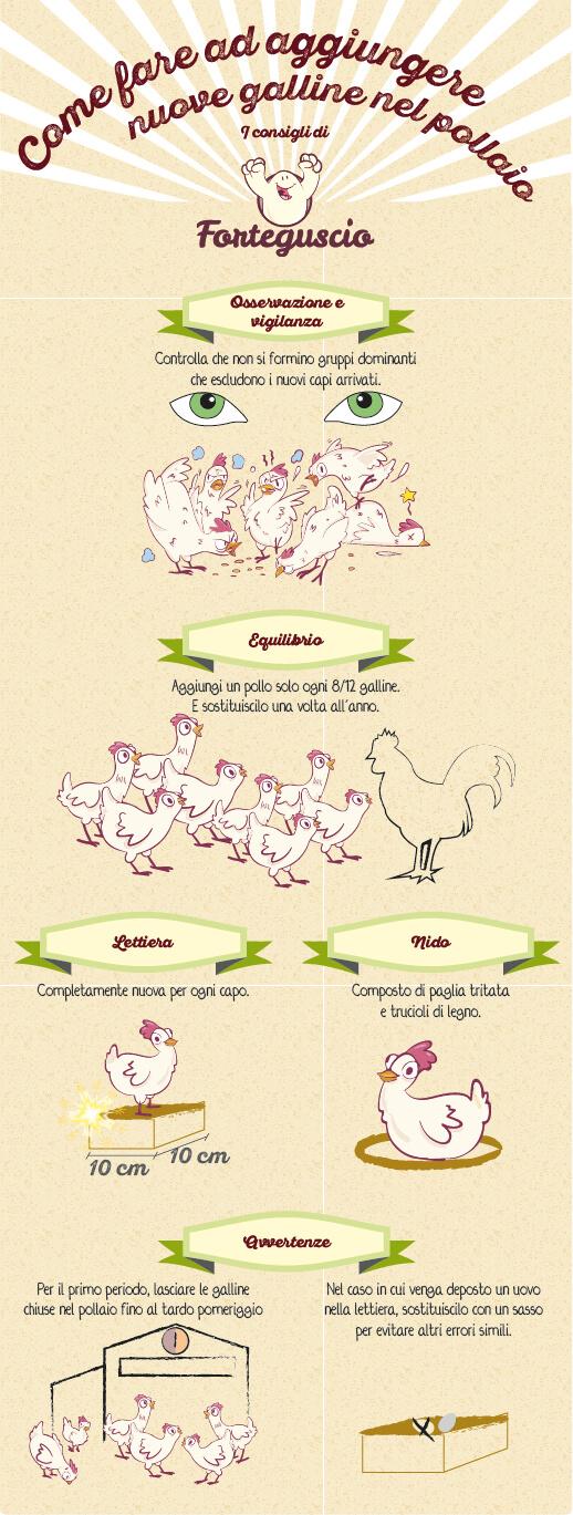 Come aggiungere nuove galline nel pollaio