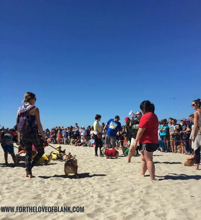 For years I have dreamed about the day I would finally attend a Corgi Beach Day with my corgi, Minnie Mouse. This year it finally happened! Oregon Corgi Beach Day was the best day I have ever had on the Oregon Coast! The best part was that it was a fund raiser benefitting the Oregon Humane Society. So all you corgi lovers out there find your nearest Corgi Beach Day and get out there to the fun!