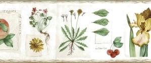 Botanical Vintage Wallpaper Border