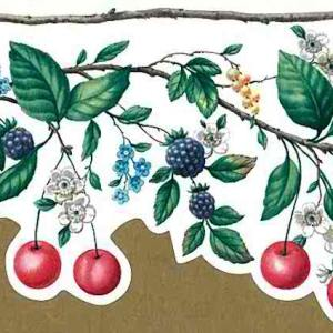 Red Cherries Kitchen Vintage Wallpaper Border Floral YO7106B FREE Ship