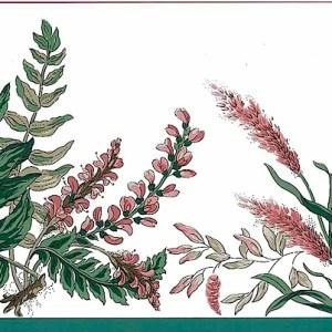 Waverly Botanical Vintage Border Green Rose FP564380 FREE Ship