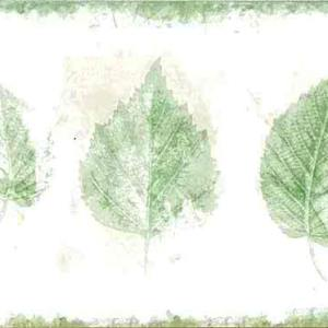 Green Leaf Vintage Wallpaper Border Kitchen 750-2792 FREE Ship