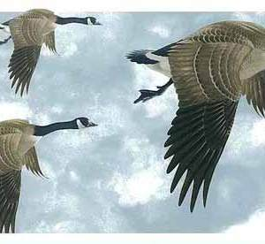 Geese Vintage Wallpaper Border Glen Loates Sky GL76374 FREE Ship