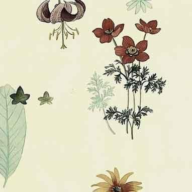 Waverly Botanical Vintage Wallpaper in Taupe