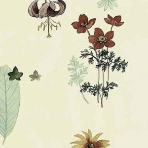 Waverly Botanical Vintage Wallpaper Ferns Kitchen Floral 572441 D/Rs