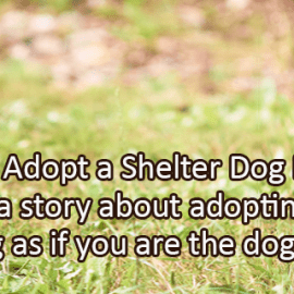 Writing Prompt for October 11: Shelter Dog