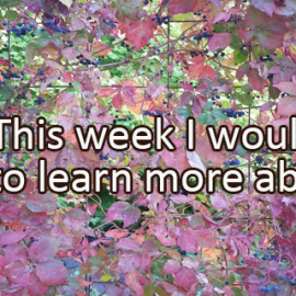 Writing Prompt for September 26: Learning This Week