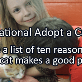 Writing Prompt for June 11: Adopt a Cat