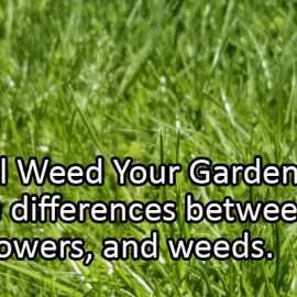 Writing Prompt for June 13: Weed Your Garden