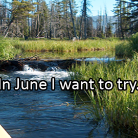 Writing Prompt for June 3: Want to Try