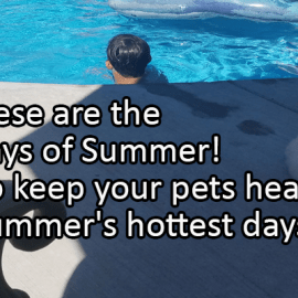 Writing Prompt for July 18: Dog Days of Summer