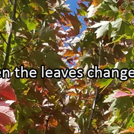 Writing Prompt for October 3: Changing Leaves