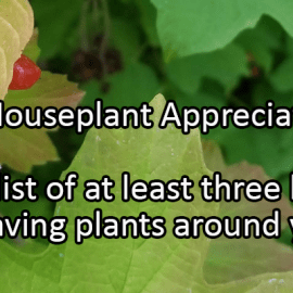 Writing Prompt for January 10: Houseplant Appreciation