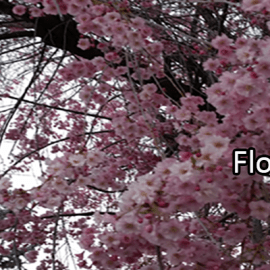 Writing Prompt for April 21: Flowers