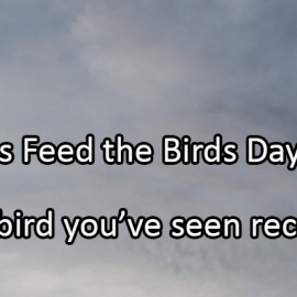 Writing Prompt for February 3: Birds