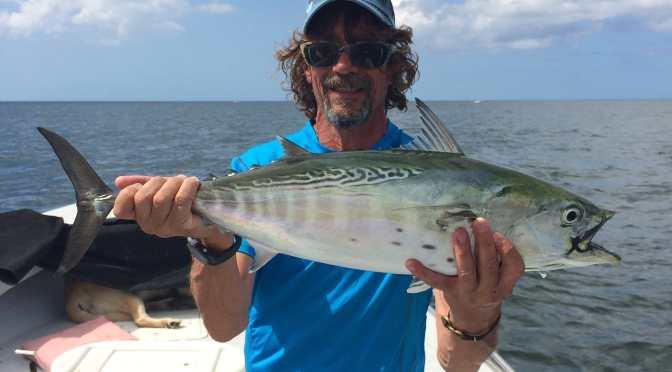 Fort Myers Fishing Report, Sunday, November 8, 2015: Bonito, Little Tunny, False Albacore Tuna ~ #FortMyers.