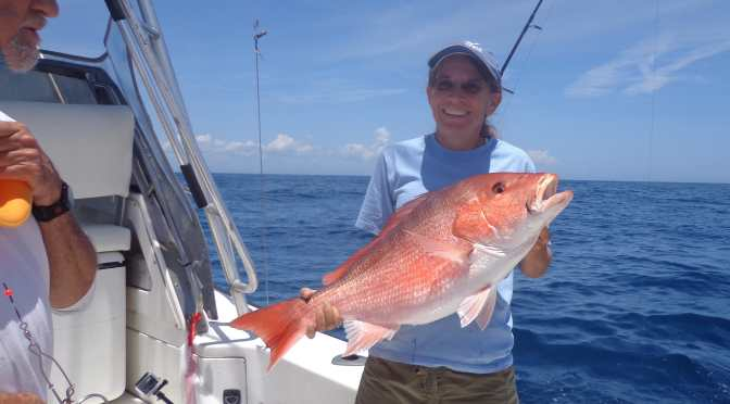 Fort Myers Fishing Report, Red Snapper, Catch & Release, Courtesy Of Florida Sea Grant, Thursday, April 14, 2016 ~ #FortMyers.