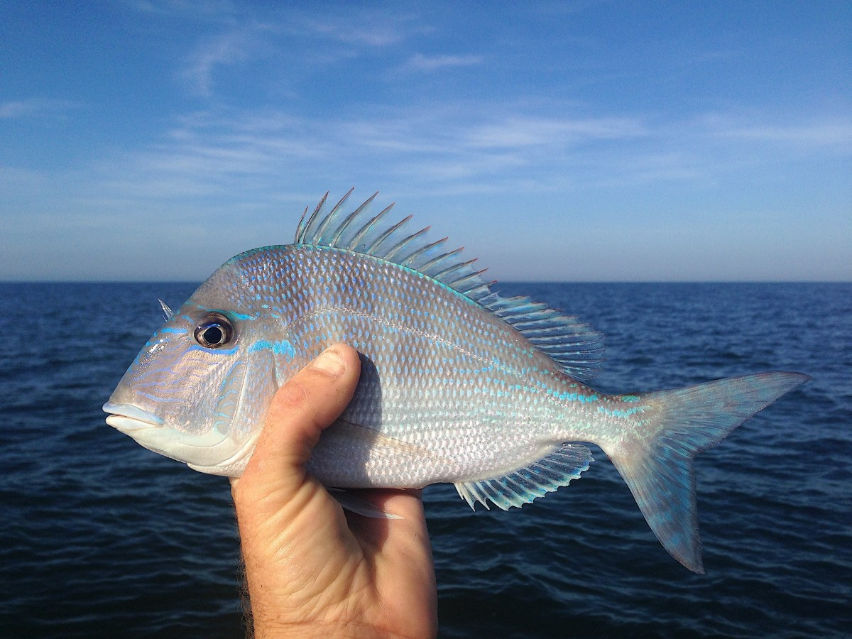 Fort Myers Fishing, December 17, 2016