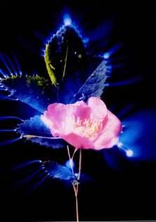 2005_36_flowers12