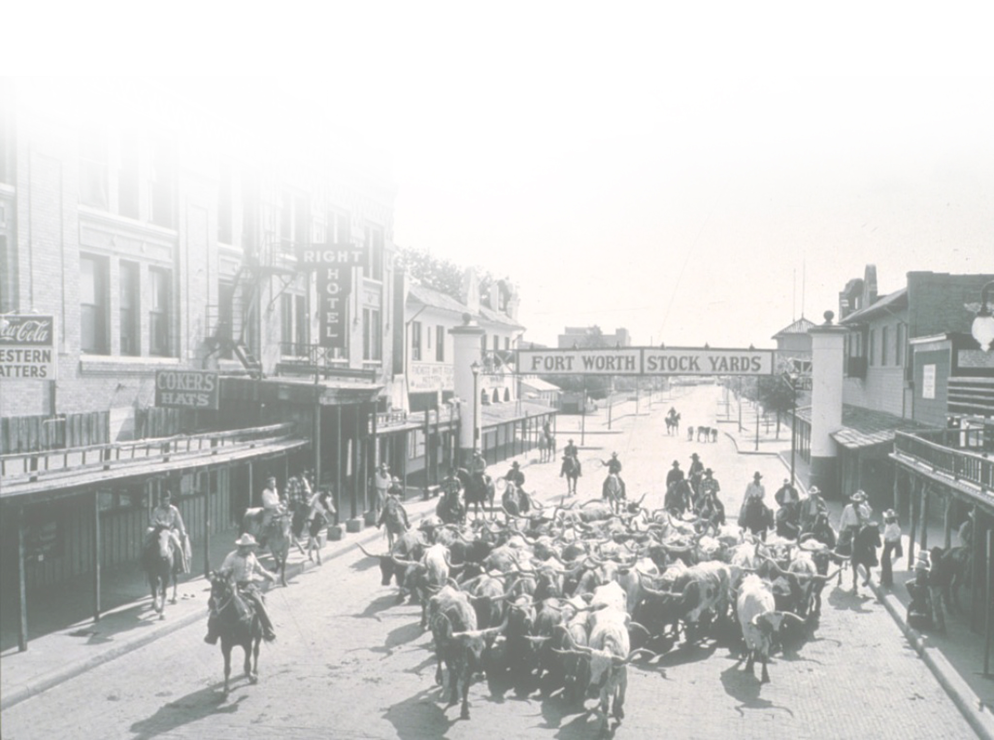 13 Best Vintage Cattle Drive Photos From Dallas Fort Worth