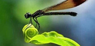 amazing_insects_1.jpg