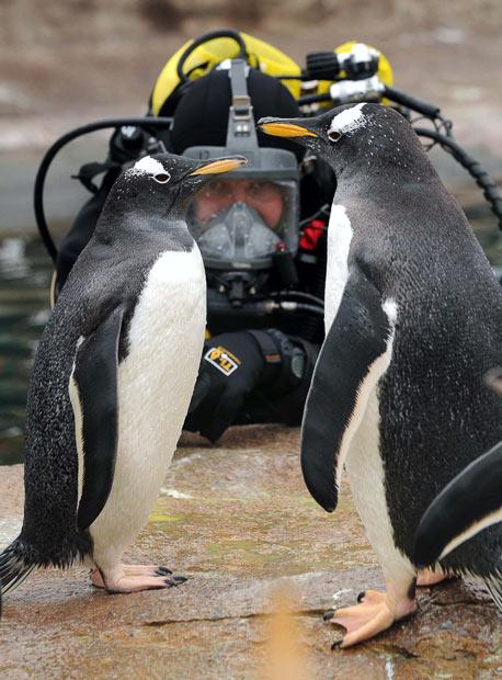 animals_in_news_21