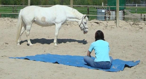 Het paard als coach