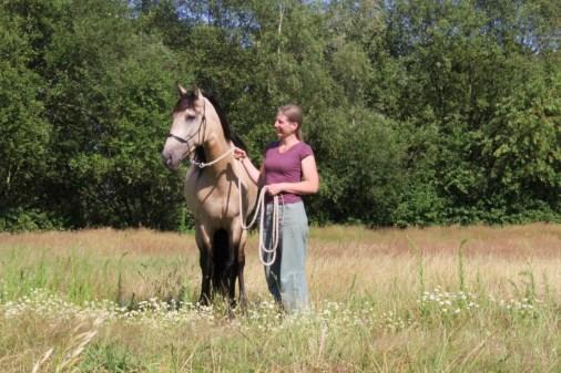 Laat paarden je helpen!