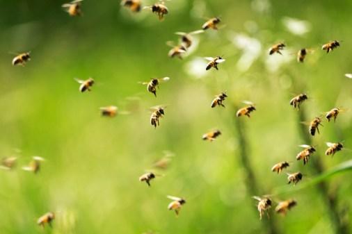 Weg met de wespenoverlast!
