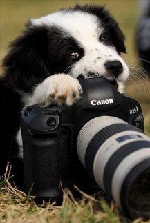 animais-gostam-de-fotografia-23