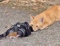 animais-gostam-de-fotografia-32