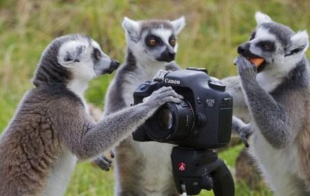 animais-gostam-de-fotografia-33