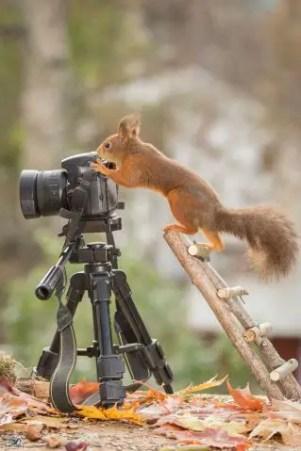 animais-gostam-de-fotografia-36