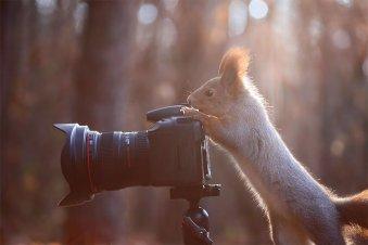 animais-gostam-de-fotografia-42