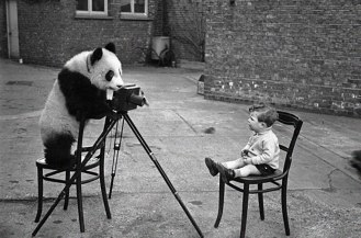 animais-gostam-de-fotografia-43