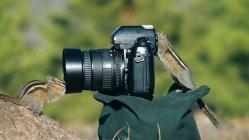 animais-gostam-de-fotografia-44