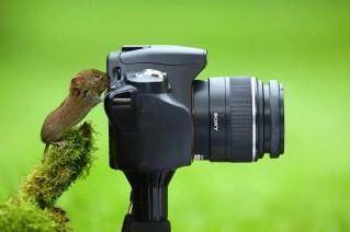 animais-gostam-de-fotografia-45