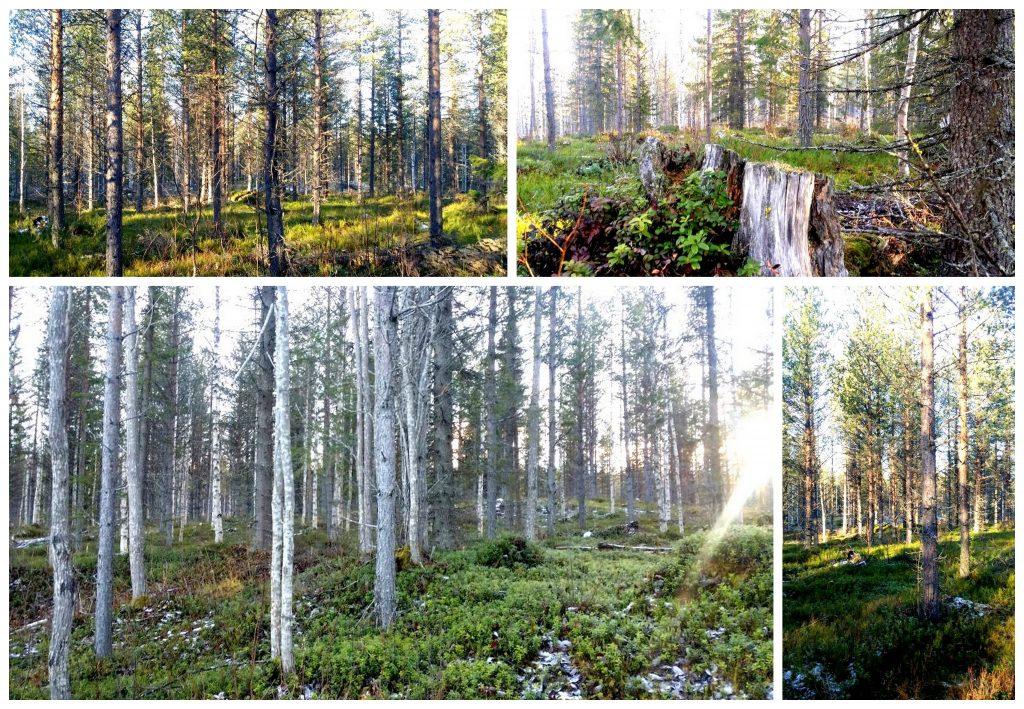 skog-42year