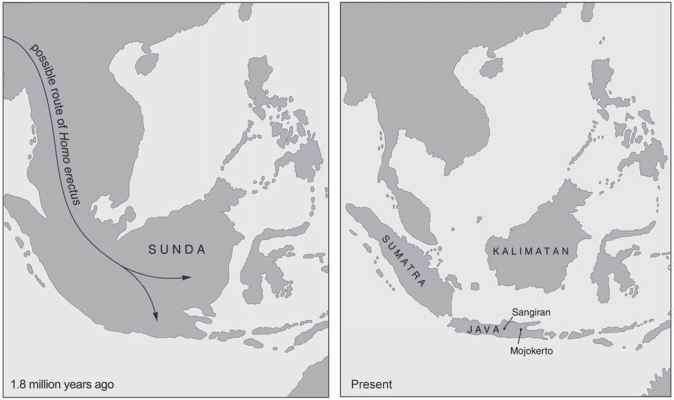 Areas Occupied Homo Erectus