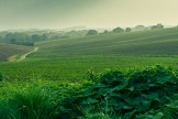 Blick über die dunstigen Felder
