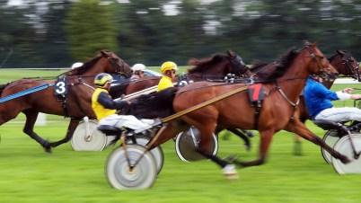 Pferderennen - Otto