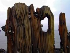 Holz Gerd-3