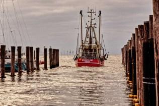 Nordseefischer