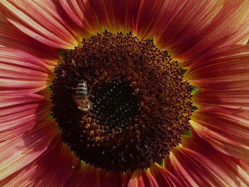 Blume - von Christa Wiedenhöfer