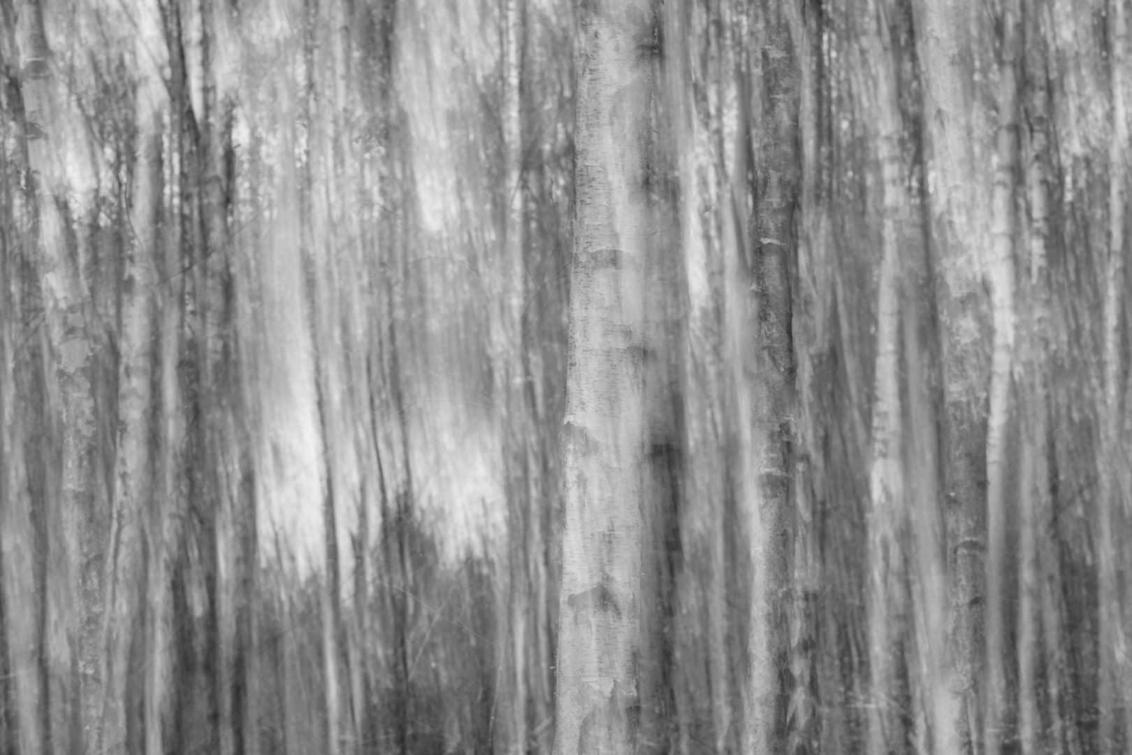Birken Abstrakt - Torsten Christ