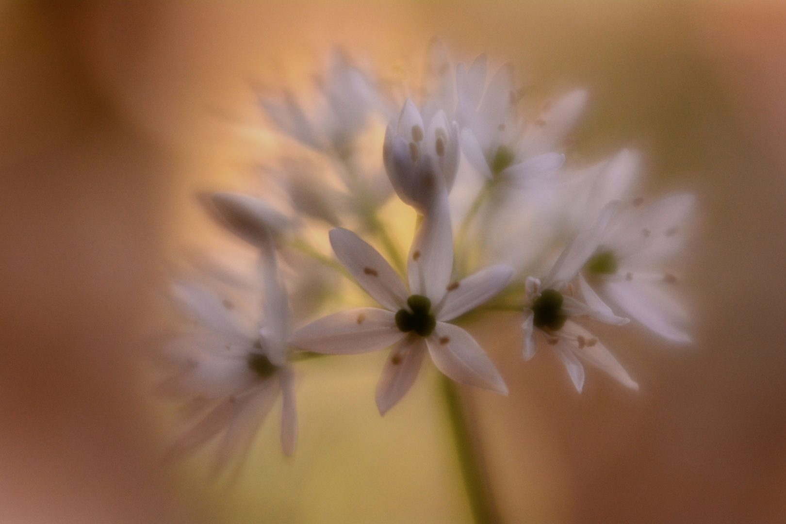 Flower-Power - von Susanne Deinhardt