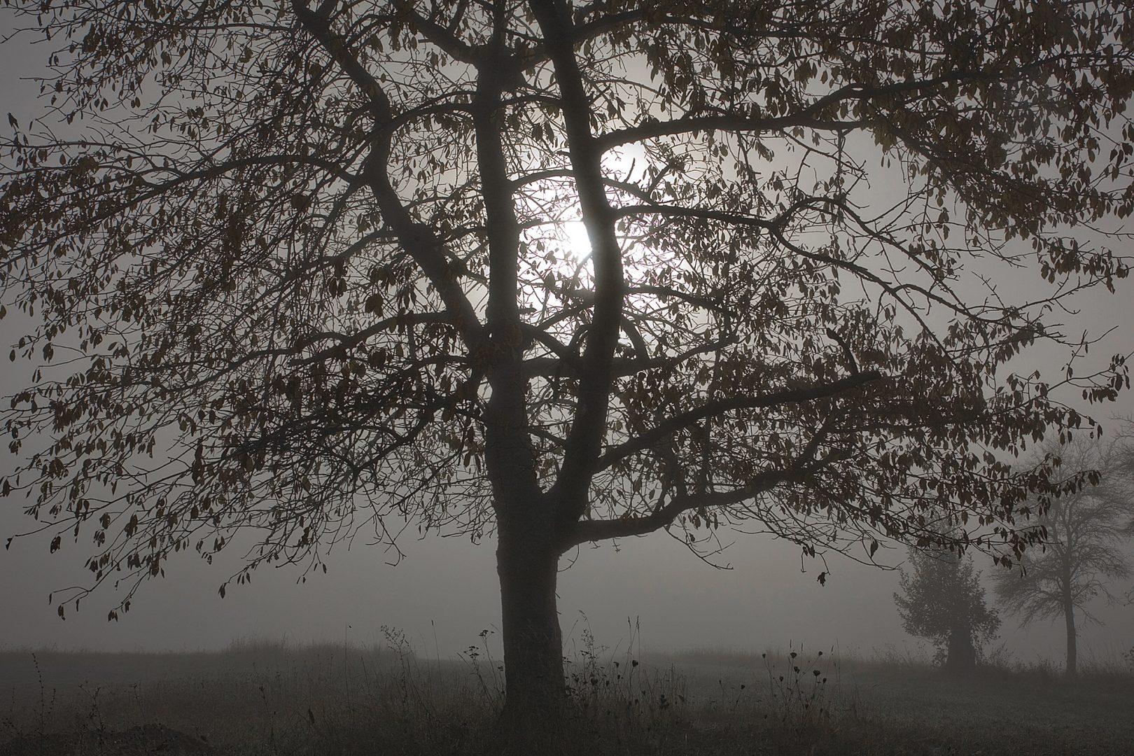 Lichtspot - von Erich Hacker