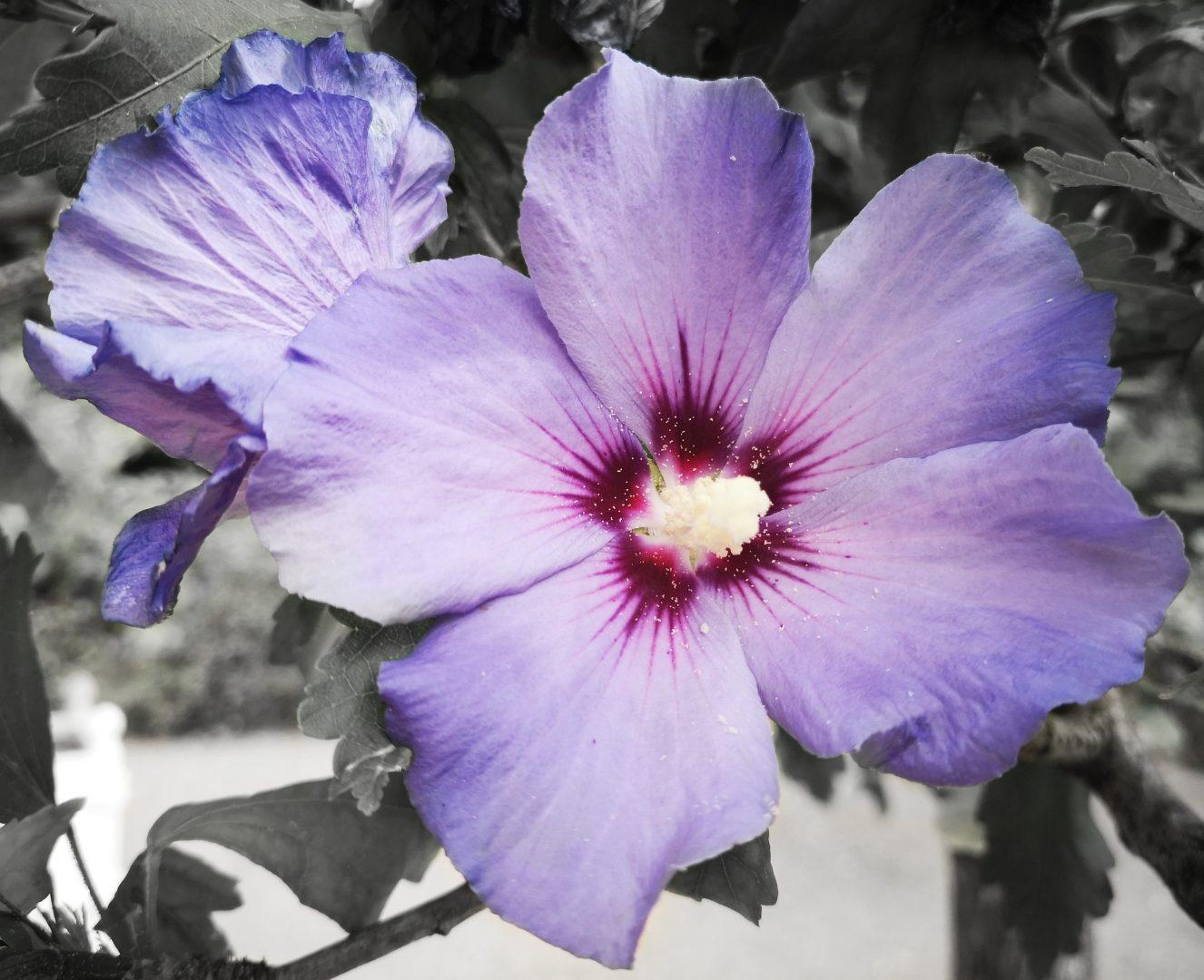Blütenpracht - Andrea Meyerhöfer